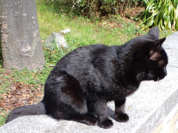 猫公園黒猫4