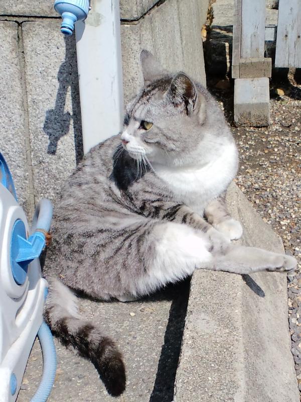 大阪神社猫2