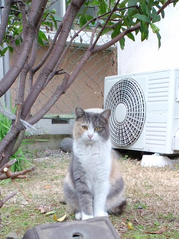 東京神社猫5