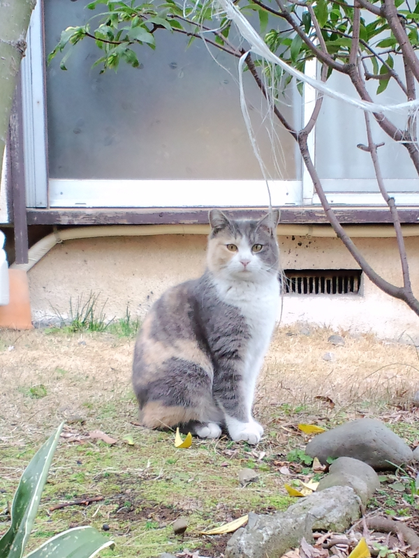 東京神社猫4