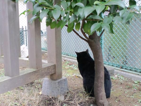 東京神社猫2