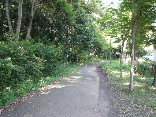 都筑緑道1