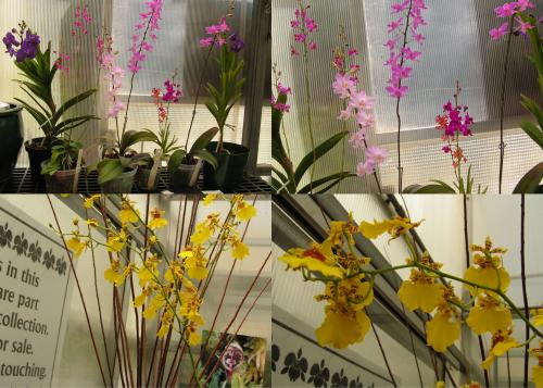 Orchid collge 1