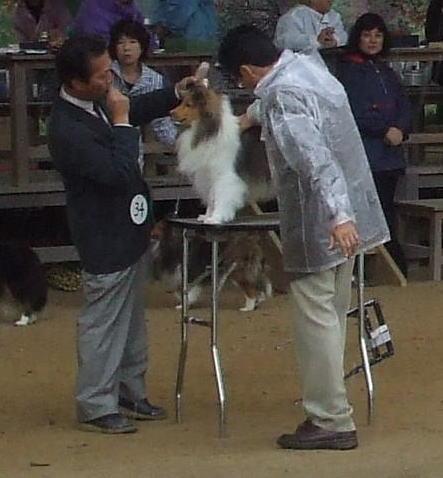 2010akihirosimaa.jpg