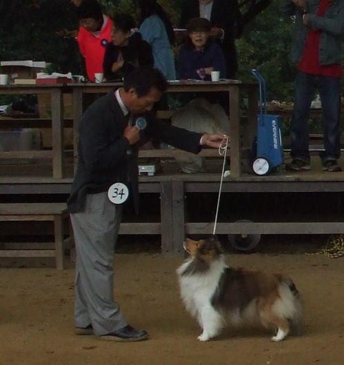 2010akihirosimad.jpg