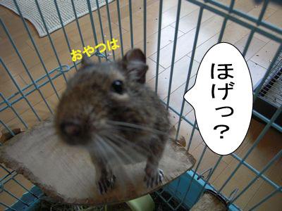 gazou-015.jpg