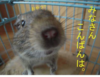 gazou-018.jpg