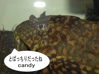 gazou-058.jpg