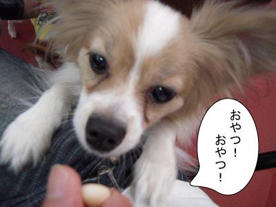 gazou-062.jpg