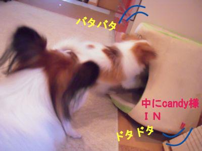 gazou-138.jpg