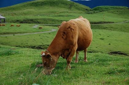 パノラマライン赤牛