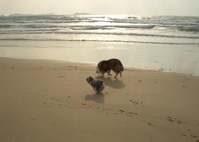 久しぶりの海岸