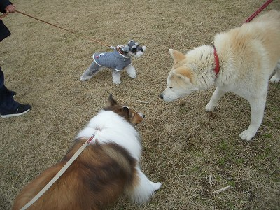 秋田犬とリズサラ