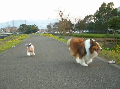 ジョギングロード