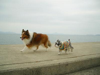 堤防で仲良く走るリズサラ