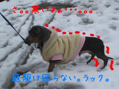 20080203yuki.jpg