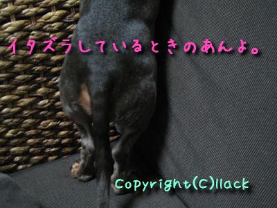 20080408-3.jpg