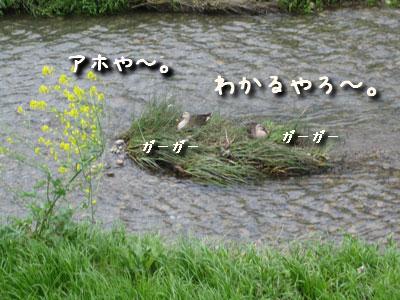 20080421-1.jpg