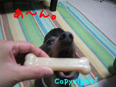 20080512-2-2.jpg