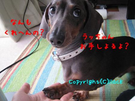 20080604-3-333.jpg