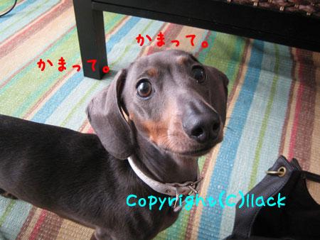 20080605-2-222.jpg