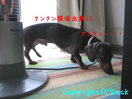20080606-1-111.jpg