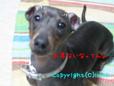 20080611-3-222.jpg