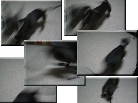20080611-8.jpg