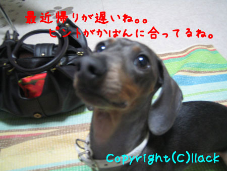 20080618-1-111.jpg