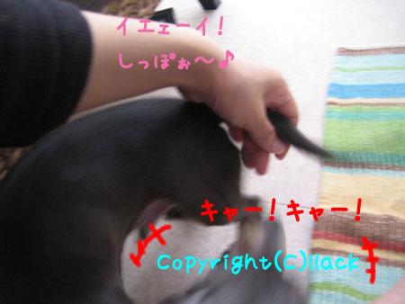20080620-2-222.jpg