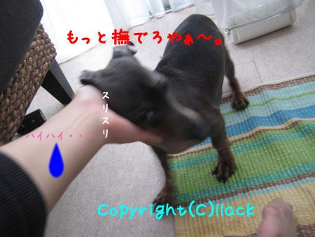 20080620-4-444.jpg