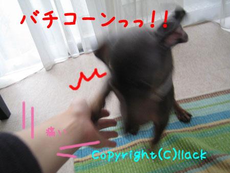 20080620-5-555.jpg
