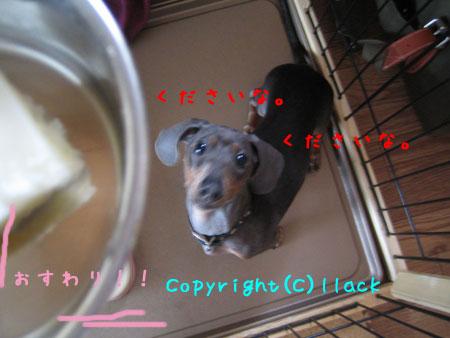 20080714-3-222.jpg