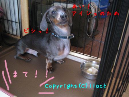 20080714-4-333.jpg