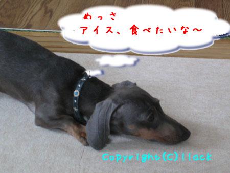 20080731-1-111