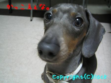 20080904-4.jpg
