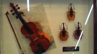 バイオリンムシ2