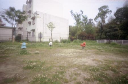 zebra01_010s.jpg