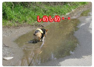 IMG_0774.jpg