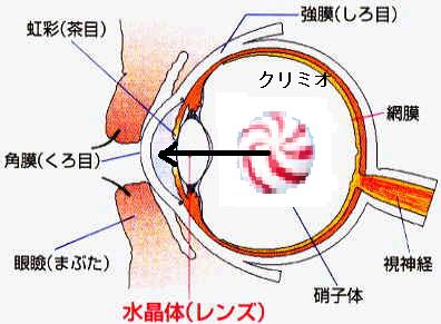 眼球の仕組み