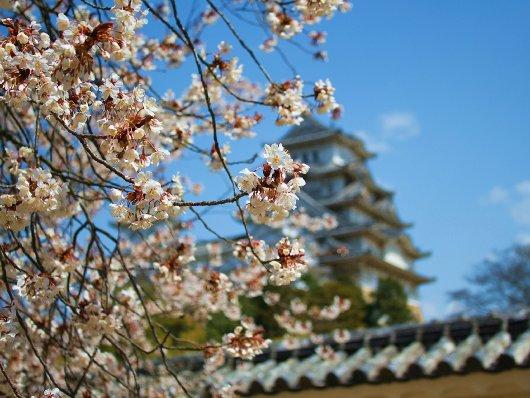 05イチゲンさまの姫路城168-530