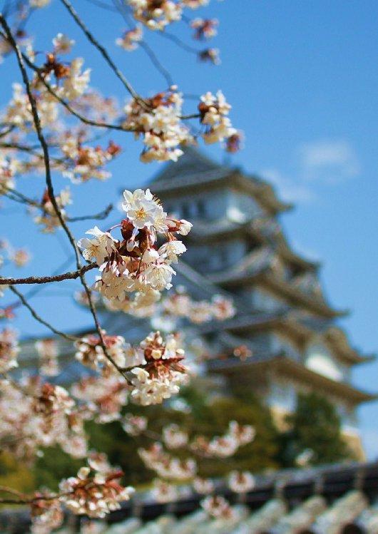 06イチゲンさまの姫路城168__2-530