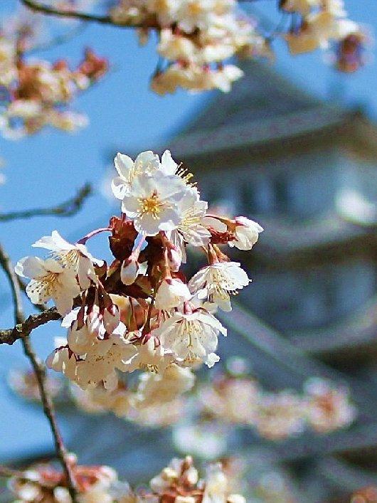 07イチゲンさまの姫路城168-2-530