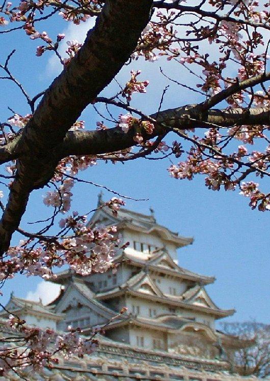08イチゲンさまの姫路城171-530