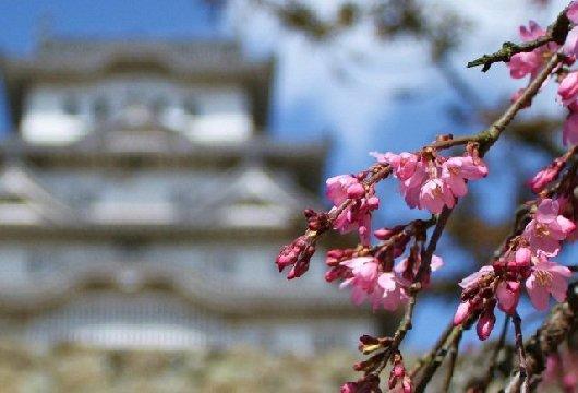 11イチゲンさまの姫路城1891__3-530