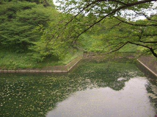 北の丸公園へお散歩2
