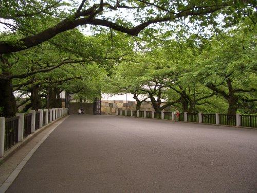 北の丸公園へお散歩5
