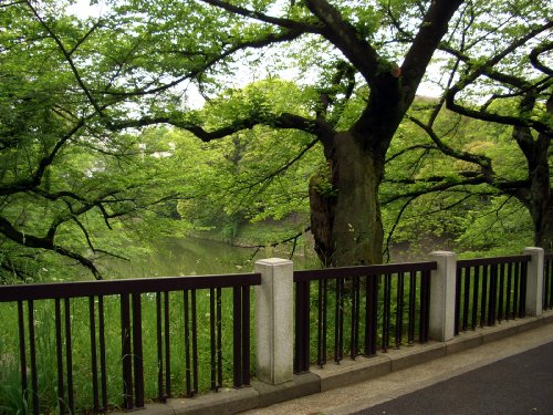北の丸公園へお散歩14