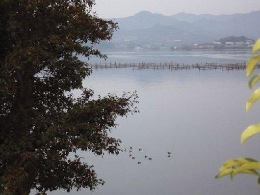 湖畔にてPansyさま