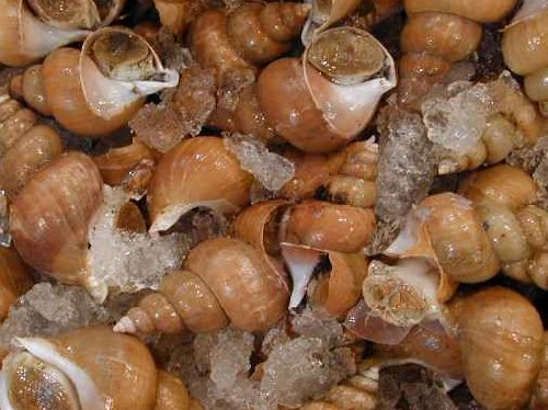 バイ貝の画像